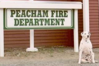 Moo in front of Peacham Fire Station
